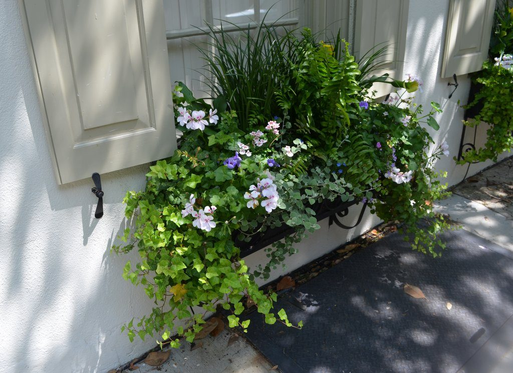 Planter Box Plants Shade