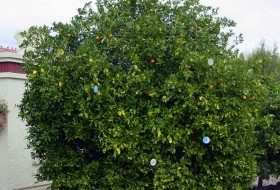 A Shiny Solution to Deter Birds From Fruit Trees