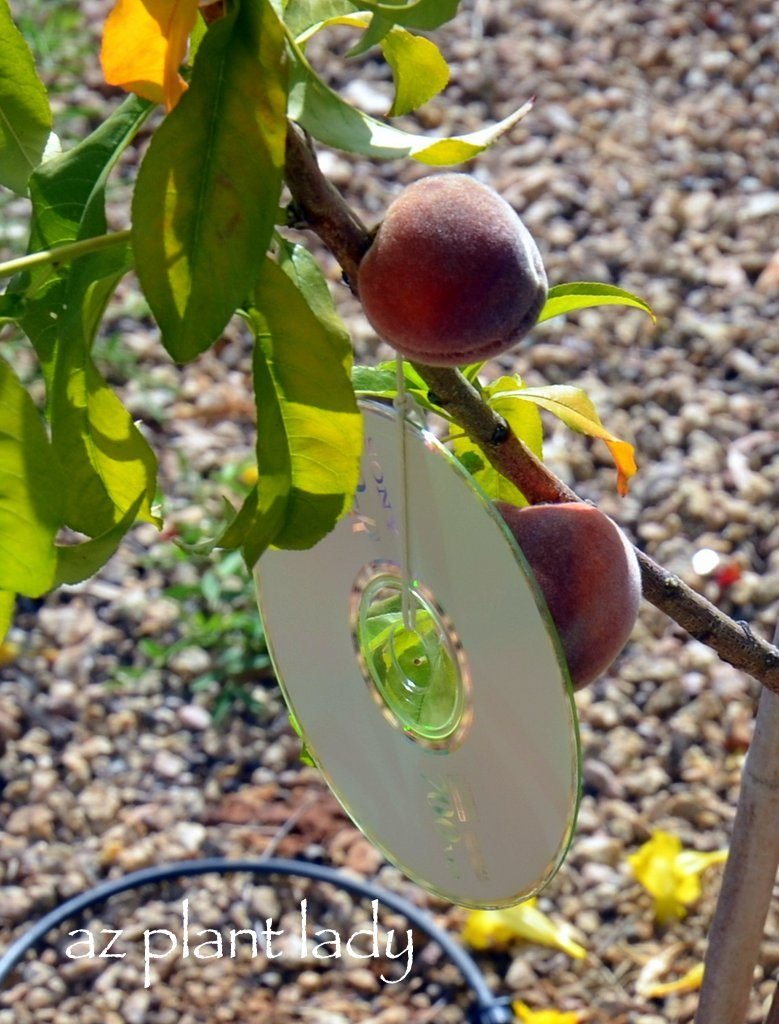 A Shiny Solution to Deter Birds From Fruit Trees - Birds and