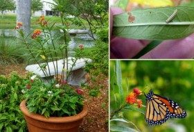 How to Make a Butterfly Garden Planter