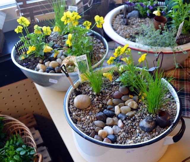 Miniature gardening create your own tiny world birds and blooms - Fairy garden containers for sale ...