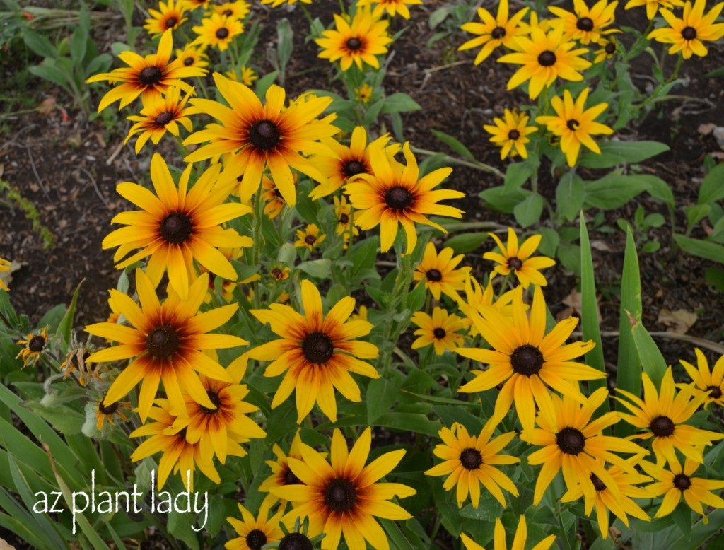 Beautiful Perennials For A Colorful Butterfly Garden Birds And Blooms
