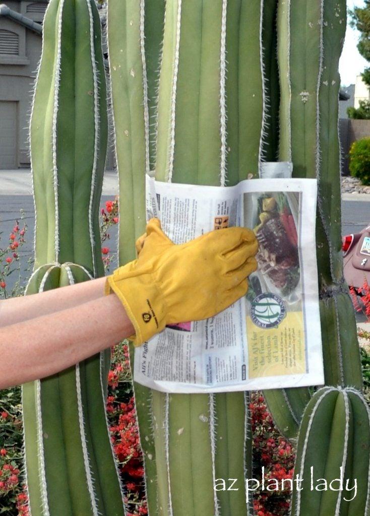 Cacti cutting