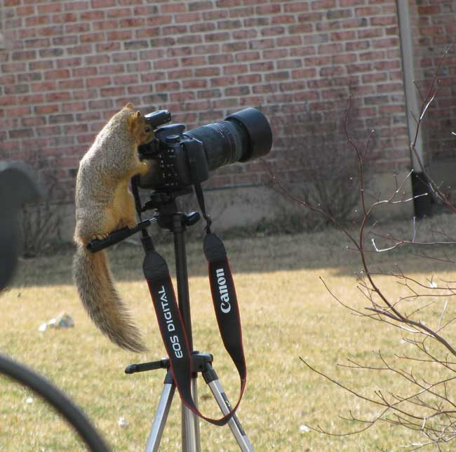 Friday Fun Photo: Squirrel Photographer