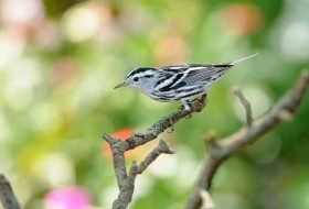 The Rewards of Weekend Birding