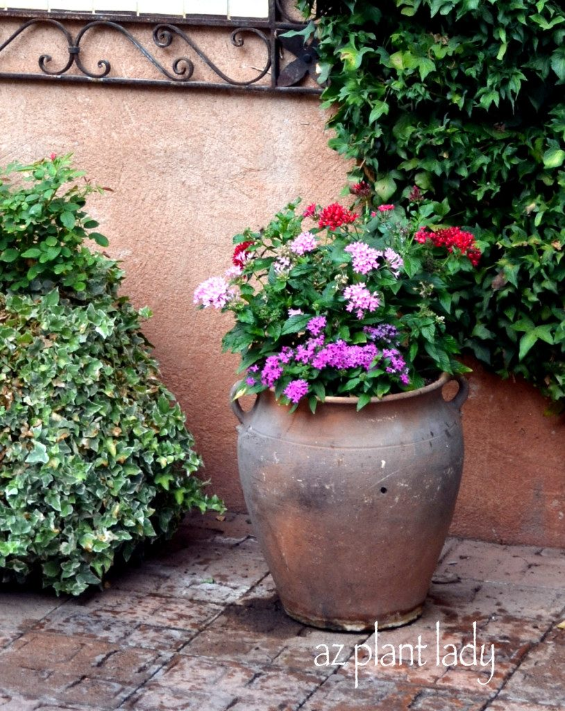 annuals container