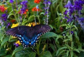 Fall Flowers That Attract Butterflies