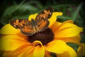 Long-Blooming Flowers for Attracting Butterflies & Hummingbirds