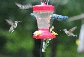 Attracting Hummingbirds For Less