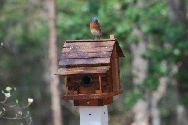 attracting nesting birds
