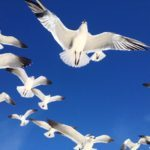 How Do Birds Fly? Answers to Common Questions About Birds