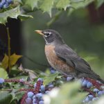 Birdscaping: Grow Plants for Nesting Birds