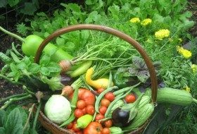 Extend the Harvest Season