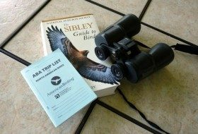 Plan a Big Day of Birding