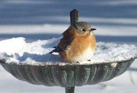 Bird Bath Tips for Winter Birds