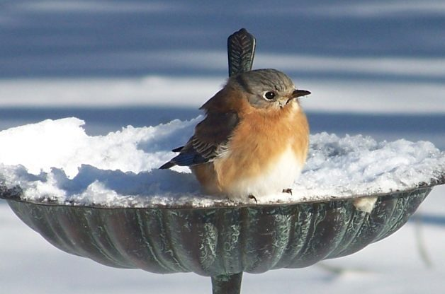 bird bath winter