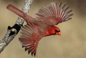 How Do Birds Fly? and Other Bird Facts