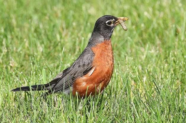 identify birds