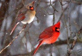 True Colors: Decoding Bird Plumage