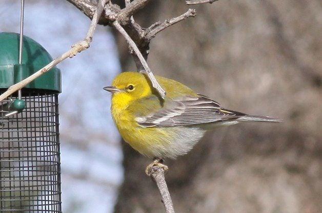 birding health