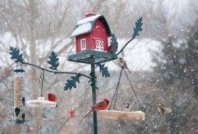 78 Solutions for Better Backyard Birding