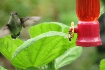 Birding Solutions