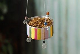 DIY Bird Feeder for Attracting Bluebirds