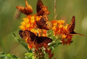 Butterfly Gardening Plans