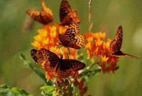 Butterfly Gardening Plans