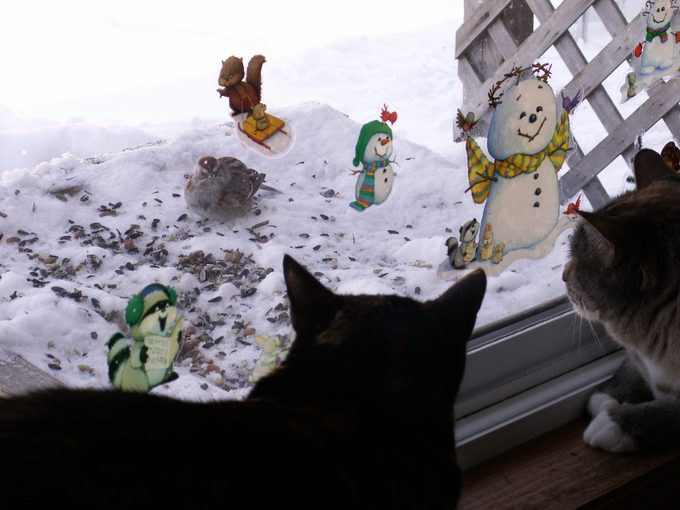 how to keep cats from killing birds, indoor cats watching birds