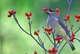 Can Birds Smell or Taste?