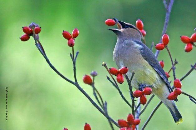 can birds taste