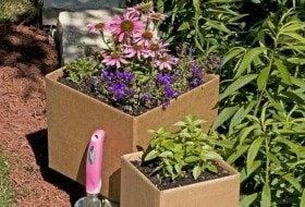 Cardboard Gardening