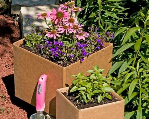 Save Money and Recycle with Cardboard Gardening