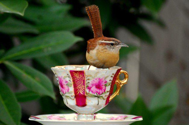chic birding