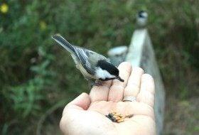 Feeding Birds by Hand