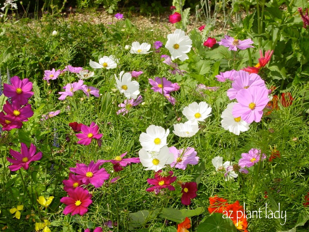 Say goodbye to summer with fall blooming annuals birds and blooms they usually come in shades of purple but are also available in yellows and orange they are easy to start from seed but for fall izmirmasajfo