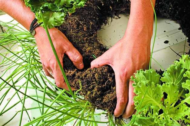 DIY Herb Garden Living Wreath 3
