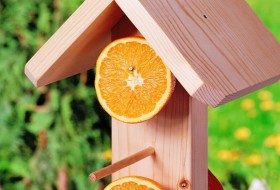 Easy DIY Oriole Feeder