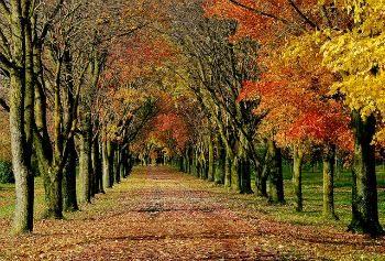 Fall Country Lane