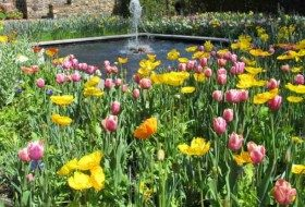 Natural Ways to Eliminate Garden Insect Pests