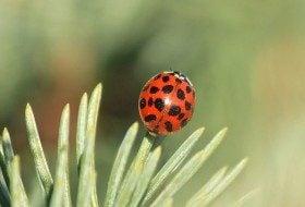 Beetles: Beneficial Garden Bugs