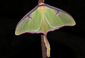 Gorgeous Garden Bugs: The Joy of Moths