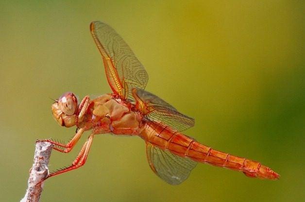 Garden Bugs Skimmer