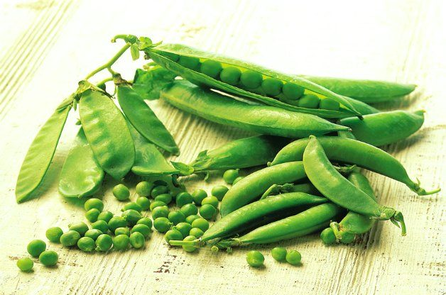 Growing Peas Birds and Blooms