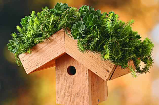 Green Roof DIY Birdhouse
