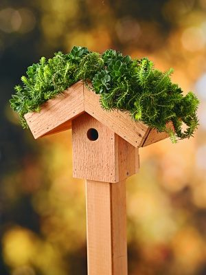 Green Roof DIY Birdhouse Vertical