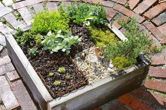 How to make a mini garden backyard projects birds and blooms for How to make a miniature garden