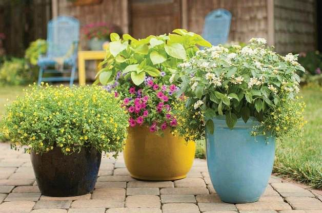 Planting a Pretty Container