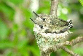Bird Nesting Marvels